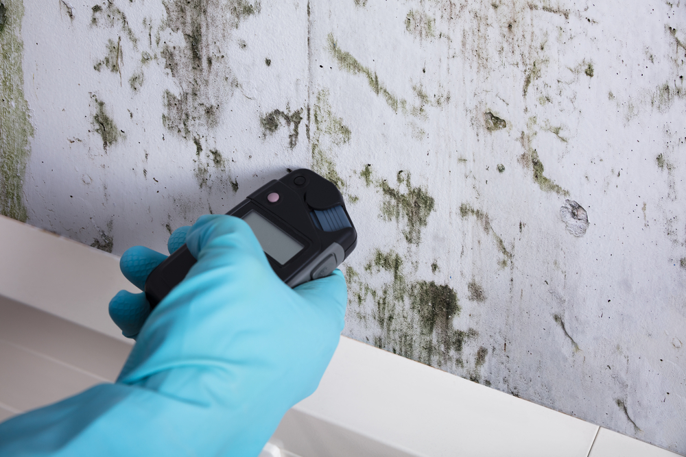 Measuring moisture during a mold inspection