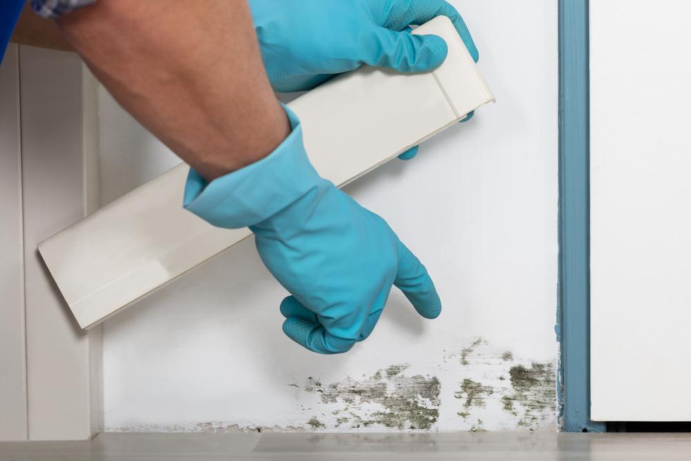 Mold inspector finds moldy wallpaper